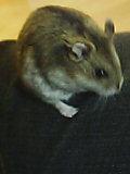 ネズミっぽい?
